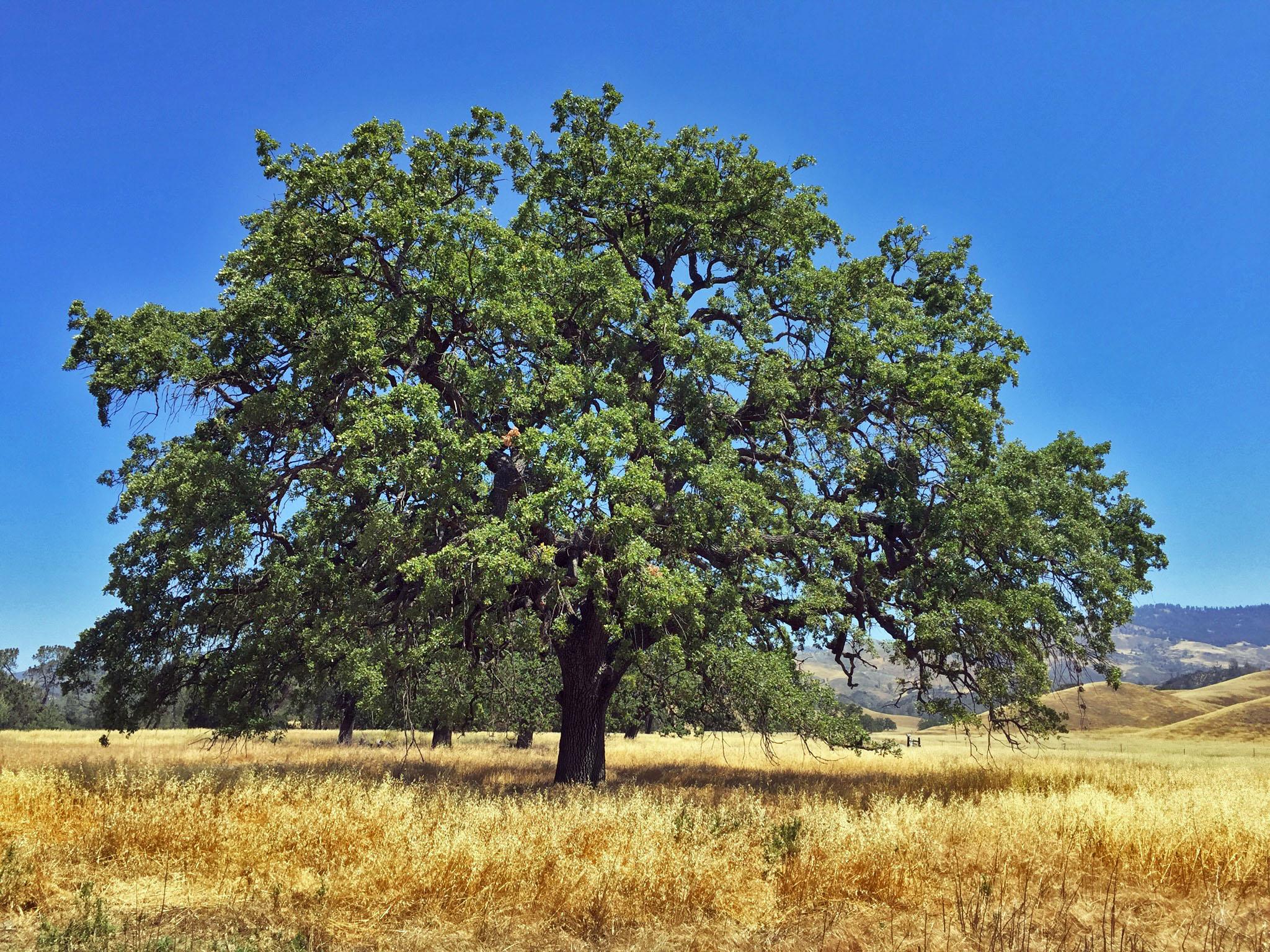 786ed_5_27_16_tree2