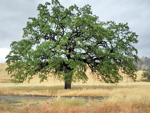 786ed_5_6_16_tree